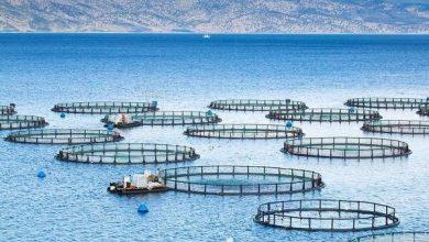 تصویر از نخستین مزرعه بومی پرورش ماهی در دریا راهاندازی می شود